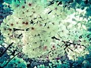 Spring Blooms  Print by Mira Dimitrijevic