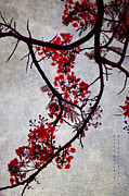 Exotic Interior Prints - Spring Bloosom in Maldives. Flamboyant Tree II. Japanese Style Print by Jenny Rainbow