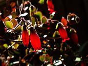 Xueling Zou - Spring Blossom 14
