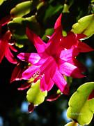 Xueling Zou - Spring Blossom 15