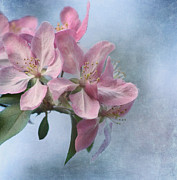 Cherry Blossom Prints - Spring Blossoms for the Cure Print by Kim Hojnacki