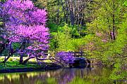Arboretum Tapestries Textiles Originals - Spring Blossoms On Lake Marmo by John Absher