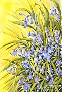 Bluebells Paintings - Spring Bluebells by Frances Evans
