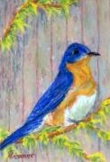 Bluebird Pastels Framed Prints - Spring Bluebird Framed Print by Sandy Hemmer
