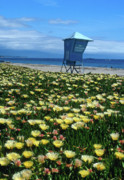 Beach Greeting Cards Prints - Spring Break Santa Barbara Print by Kathy Yates