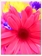 Stimulating  Colored Flower Prints - Spring Burst Colors Print by Debra     Vatalaro