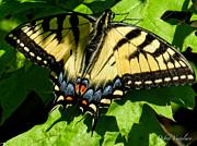 Spring Butterfly Print by Debra     Vatalaro