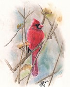 Spring Pastels Originals - Spring Cardinal by Christian Conner