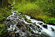 Green Forest Prints - Spring Cascades Print by Mike  Dawson