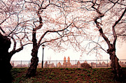 Spring Nyc Metal Prints - Spring Cherry Blossoms - Central Park Reservoir Metal Print by Vivienne Gucwa