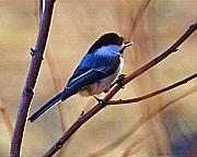 Diane Berry Paintings - Spring Chickadee by Diane E Berry