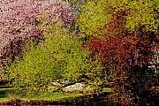 Park Landscapes Framed Prints - Spring Colors Framed Print by Juergen Roth