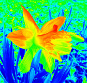 Computer Generated Flower Photos - Spring Craving Colors by Kim Galluzzo Wozniak