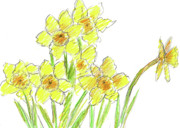 Easter Flowers Drawings Posters - Spring Daffodils Poster by Cathie Richardson