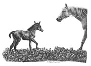 Mare And Foal Pencil Drawing Drawings - Spring deLights by Marianne NANA Betts