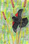 Blackbird Drawings Metal Prints - Spring Fever Metal Print by Don  Gallacher