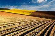Furrows Framed Prints - Spring Fields Framed Print by Evgeni Dinev
