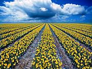 Flowers Field Prints - Spring Fields Print by Photodream Art