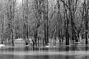 Flooding Framed Prints - Spring Flooding Framed Print by Sophie Vigneault
