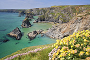 Land Feature Art - Spring Flowers At The Bedruthan Steps, Cornwall, England by David Clapp