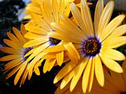 Barbara Drake - Spring Flowers