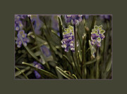 Springflowers Metal Prints - Spring Flowers Metal Print by Gemblue Photography