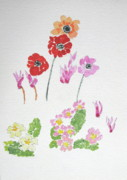 Primroses Drawings Prints - Spring Flowers Print by Maria Joy