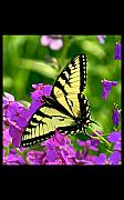 Butterfly Artwork Prints - Spring Glory Print by Robert Pearson