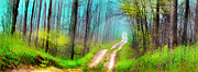 Gina Signore Digital Art - Spring green dirt road by Gina Signore