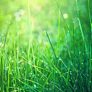 Green Blade Of Grass Posters - Spring Green Grass Poster by Dirk Wüstenhagen Imagery