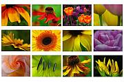 Abstract Flower Photo Framed Prints - Spring Greetings Framed Print by Juergen Roth