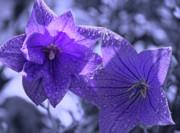 Cathy  Beharriell - Spring Hope