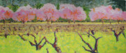 Sonoma County Vineyards. Pastels Framed Prints - Spring Hwy 128 Framed Print by Dan Scannell