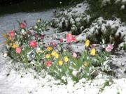 Anna  Duyunova - Spring in Calgary