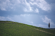 Grapes Photo Originals - Spring in Chianti by Franco Franceschi