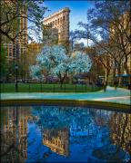 Flatiron Building Posters - Spring In Madison Square Park Poster by Chris Lord
