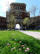 Brick Schools Photos - Spring in Oregon State University by Tanya  Searcy