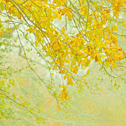 Slightclutter Mist Prints - Spring into Fall Print by Katya Horner