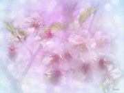 Cherry Blossoms Framed Prints - Spring Is Here Framed Print by Eena Bo