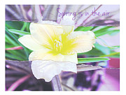 Lily Flowers - Spring is in the air by Cathie Tyler