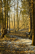 Orchard Trail Prints - Spring Light on the winter trail Print by LeeAnn McLaneGoetz McLaneGoetzStudioLLCcom