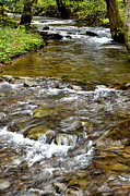 Trout Photo Posters - Spring Monongahela National forest Poster by Thomas R Fletcherun