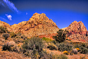 Burros Metal Prints - Spring Mountain Ranch in the Red Rock Canyon Metal Print by David Patterson