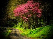 Red Bud Posters - Spring Mountain Road Poster by Michael L Kimble
