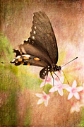 Swallowtail Butterflies Framed Prints - Spring Pastel Framed Print by Lois Bryan