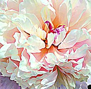 Rose Petals Framed Prints - Spring Peony Framed Print by Mindy Newman
