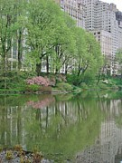 Pond In Park Framed Prints - Spring Reflections of Manhattan in Central Park Framed Print by Margaret Bobb