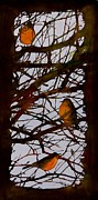 Branches Tapestries - Textiles Posters - Spring Robins Gather Poster by Carolyn Doe