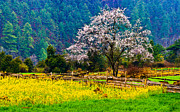 Tibet Prints - Spring Scenery At Bome, Tibet Print by Feng Wei Photography