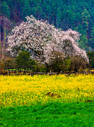 Tibet Prints - Spring Scenery In Bome, Tibet Print by Feng Wei Photography